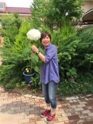 田村さんと紫陽花引き