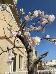 心理の部屋の隣の桃の花